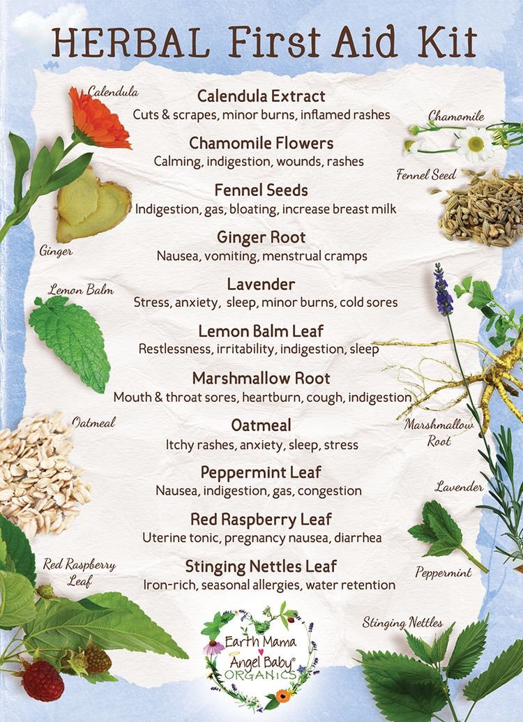 Your First Aid Kit – Herbal Essentials Infographic